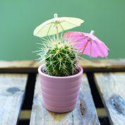 cadeaubon-plantje