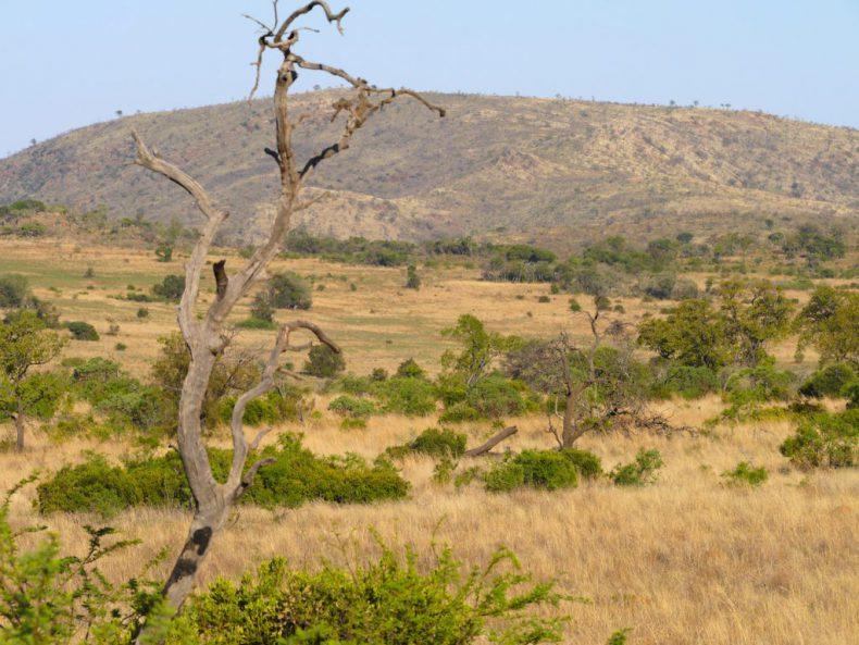 Pilanesberg-National-Parc