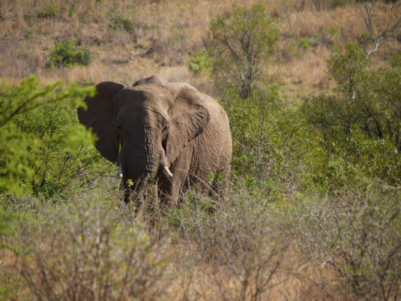 South-Africa-Pilanesberg-Elephant