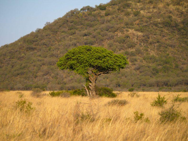 South-Africa-Pilanesberg-National-Parc