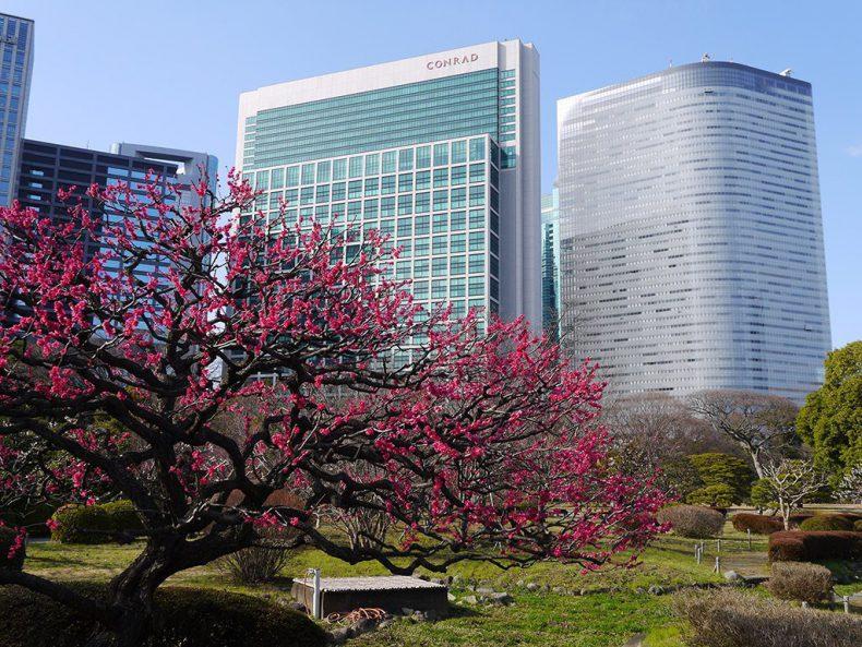 Japan-Tokyo-skyscrapers-park