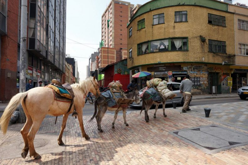colombia-bogota-horses