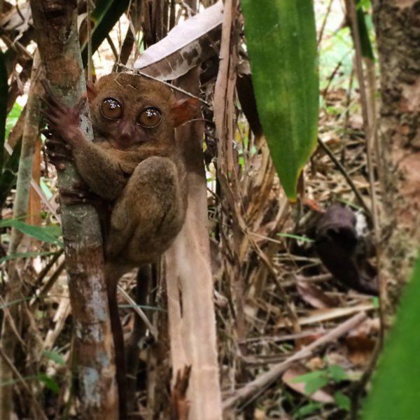 tarsier-sanctuary-bohol