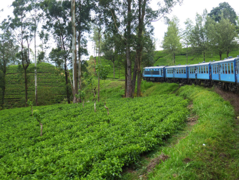 tea-plantation-sri-lanka-train-journey